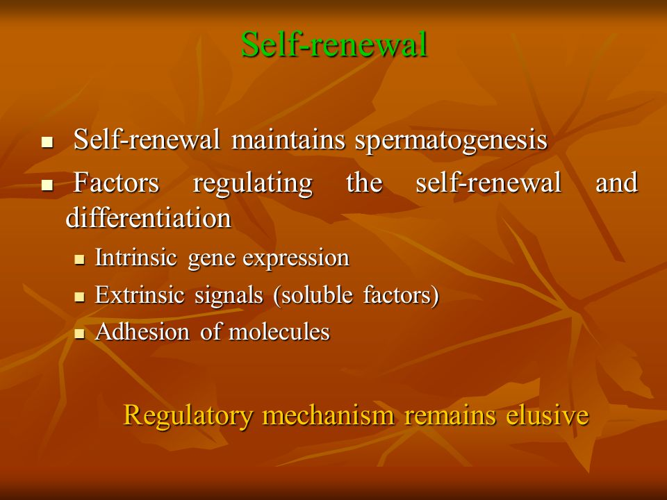 Self-renewal Self-renewal maintains spermatogenesis Self-renewal maintains spermatogenesis Factors regulating the self-renewal and differentiation Fac