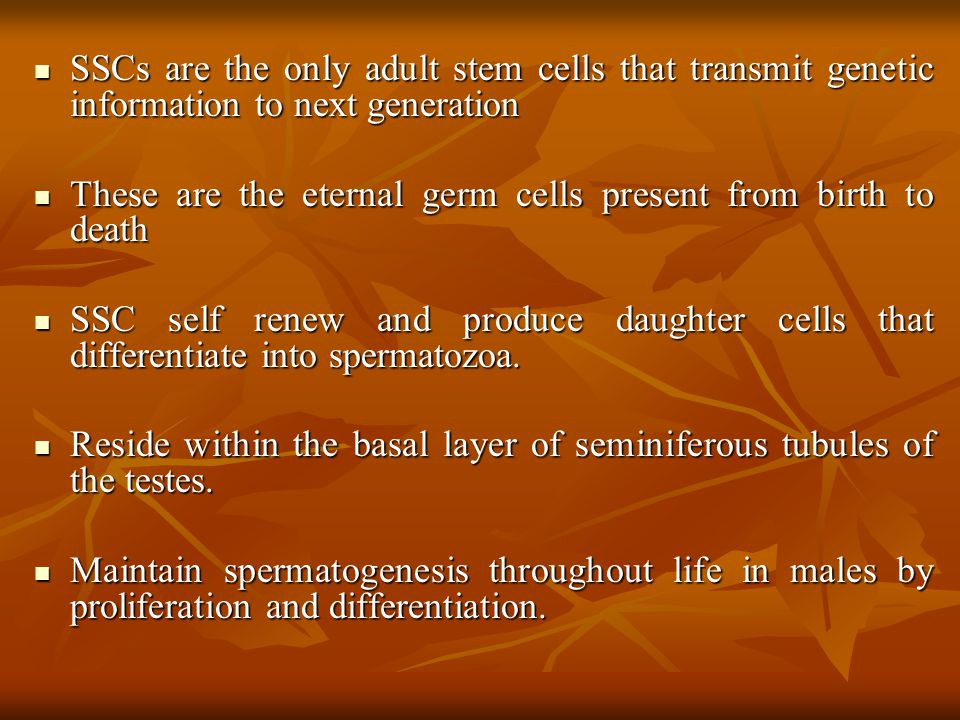 SSCs are the only adult stem cells that transmit genetic information to next generation SSCs are the only adult stem cells that transmit genetic infor