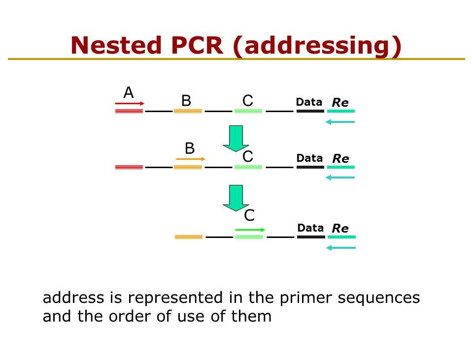 Hierarchical DNA Memory NPMM provides a high level of data security NPMM has a large capacity with a high reaction specificity Enlarge the address space by using a small number of primer sequences Reduce the total errors by removing (diluting) the error products in each step.