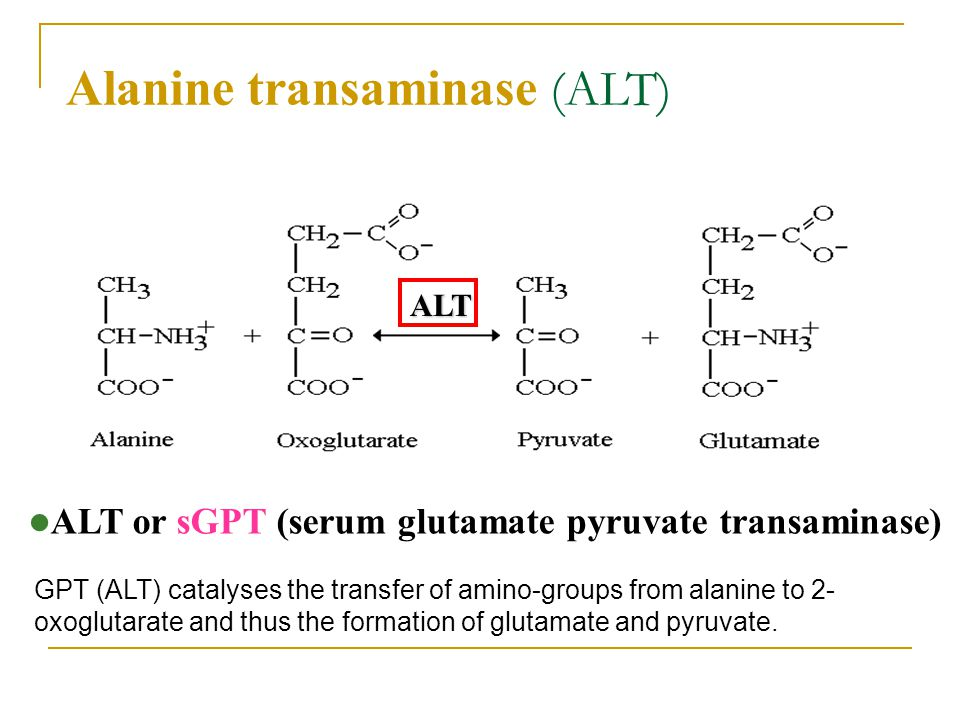 ALT is an enzyme produced in hepatocytes and is highly concentrated in the liver.