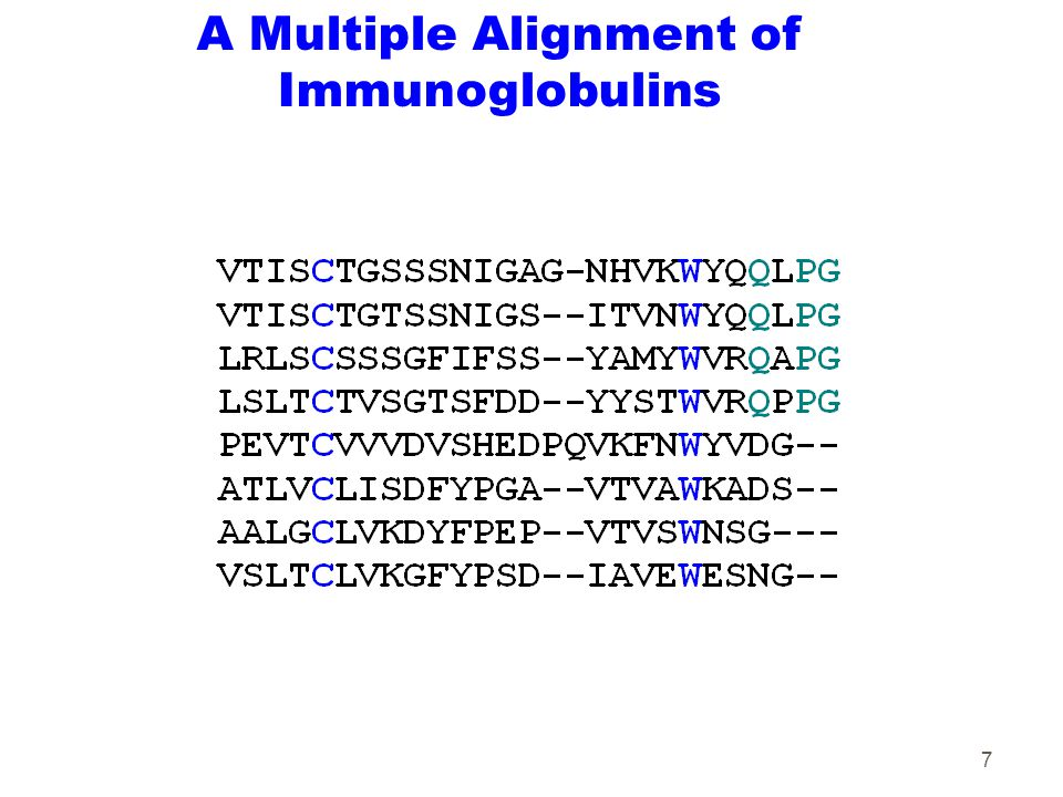 7 A Multiple Alignment of Immunoglobulins