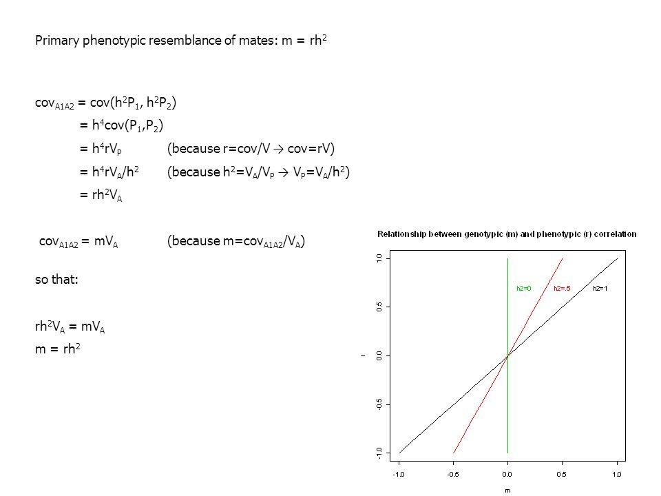 Primary phenotypic resemblance of mates: m = rh 2 cov A1A2 = cov(h 2 P 1, h 2 P 2 ) = h 4 cov(P 1,P 2 ) = h 4 rV P (because r=cov/V → cov=rV) = h 4 rV A /h 2 (because h 2 =V A /V P → V P =V A /h 2 ) = rh 2 V A cov A1A2 = mV A (because m=cov A1A2 /V A ) so that: rh 2 V A = mV A m = rh 2
