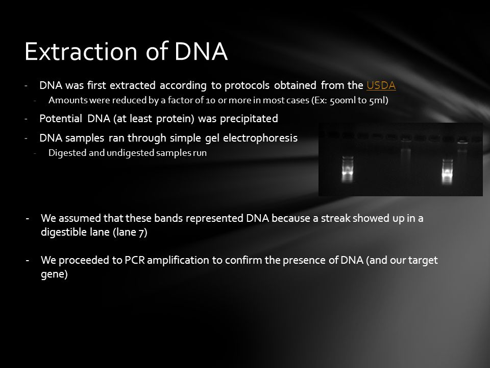 -DNA was first extracted according to protocols obtained from the USDAUSDA -Amounts were reduced by a factor of 10 or more in most cases (Ex: 500ml to