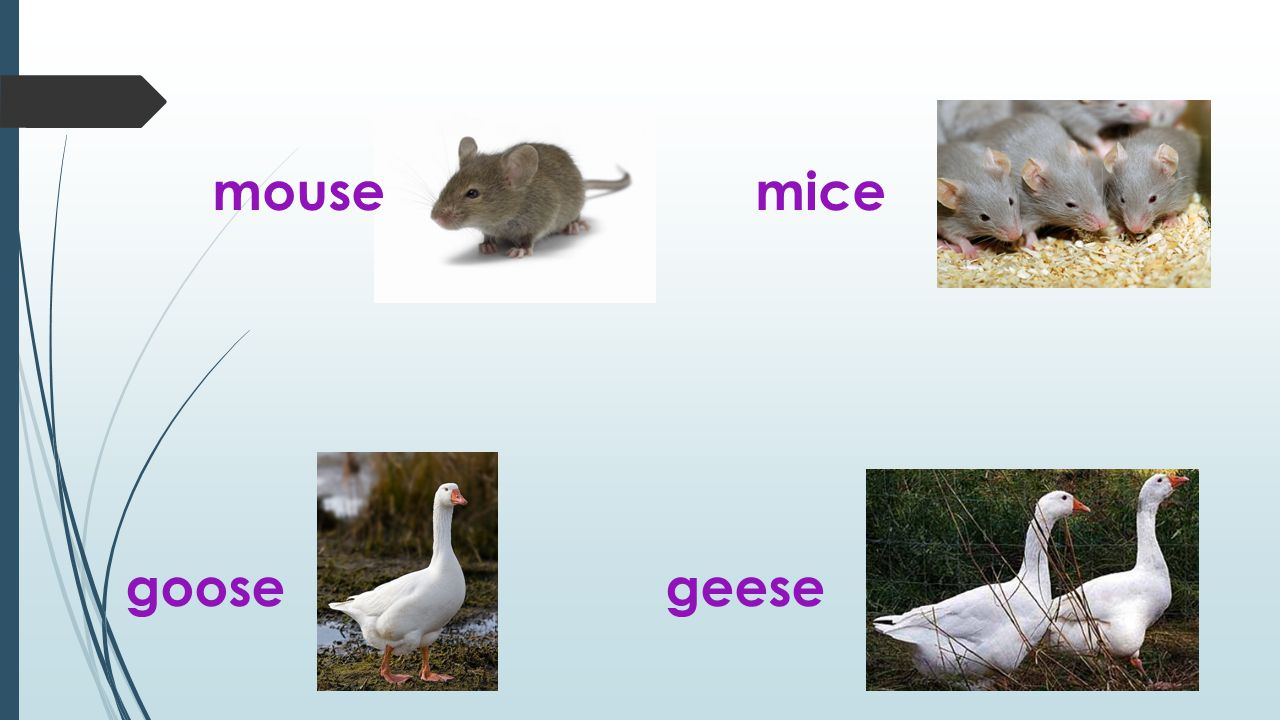 mousemice goosegeese