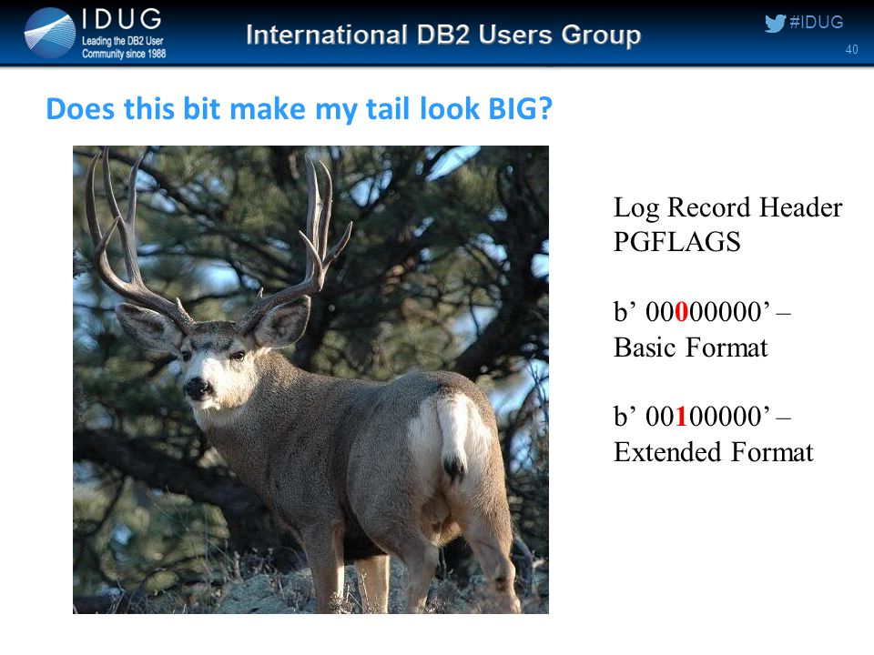 #IDUG Does this bit make my tail look BIG.