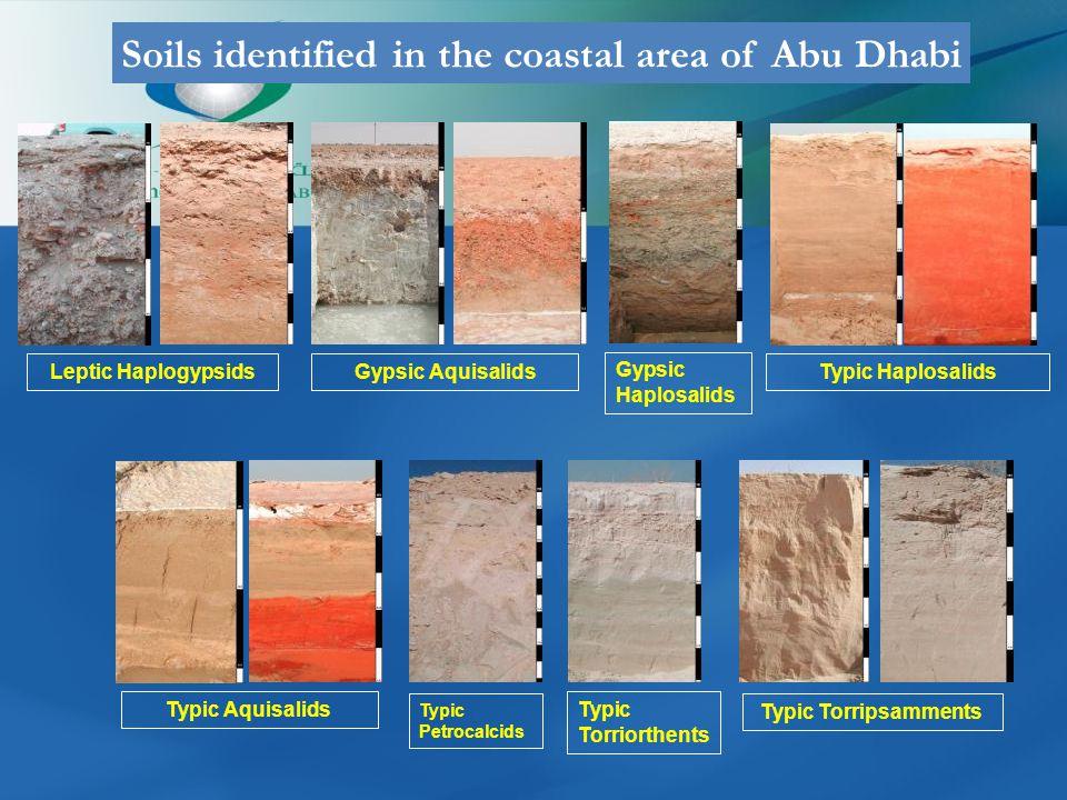 Gypsic Aquisalids Gypsic Haplosalids Typic HaplosalidsLeptic Haplogypsids Typic Aquisalids Typic Petrocalcids Typic Torriorthents Typic Torripsamments Soils identified in the coastal area of Abu Dhabi