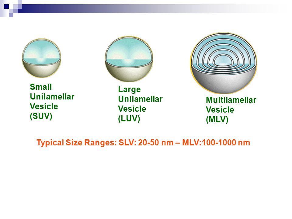Small Unilamellar Vesicle (SUV) Large Unilamellar Vesicle (LUV) Multilamellar Vesicle (MLV) Typical Size Ranges: SLV: 20-50 nm – MLV:100-1000 nm