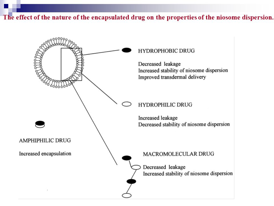 The effect of the nature of the encapsulated drug on the properties of the niosome dispersion.