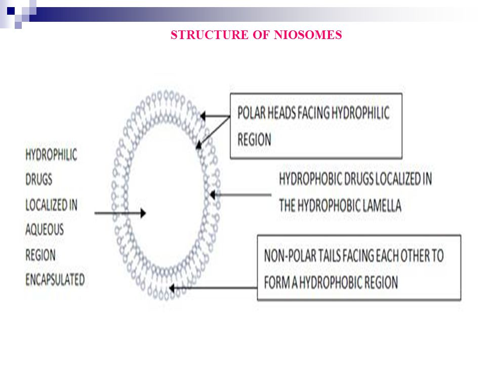 STRUCTURE OF NIOSOMES