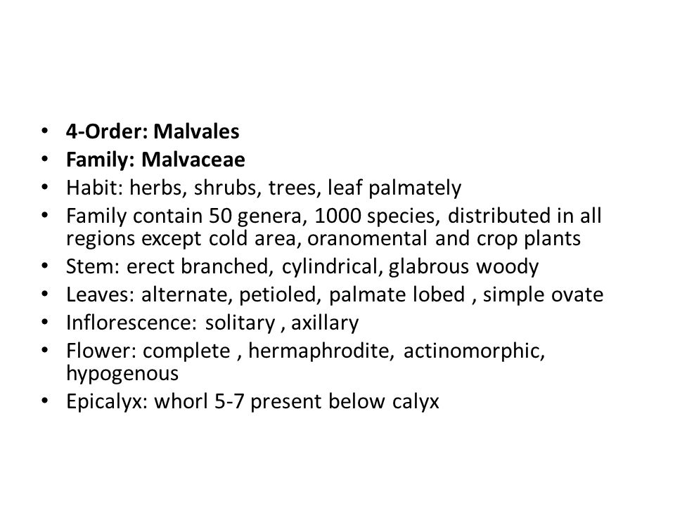 4-Order: Malvales Family: Malvaceae Habit: herbs, shrubs, trees, leaf palmately Family contain 50 genera, 1000 species, distributed in all regions except cold area, oranomental and crop plants Stem: erect branched, cylindrical, glabrous woody Leaves: alternate, petioled, palmate lobed, simple ovate Inflorescence: solitary, axillary Flower: complete, hermaphrodite, actinomorphic, hypogenous Epicalyx: whorl 5-7 present below calyx