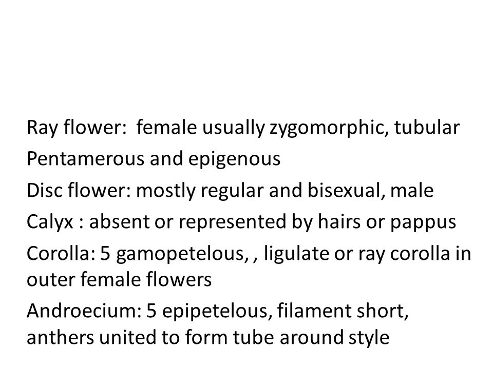 Ray flower: female usually zygomorphic, tubular Pentamerous and epigenous Disc flower: mostly regular and bisexual, male Calyx : absent or represented by hairs or pappus Corolla: 5 gamopetelous,, ligulate or ray corolla in outer female flowers Androecium: 5 epipetelous, filament short, anthers united to form tube around style
