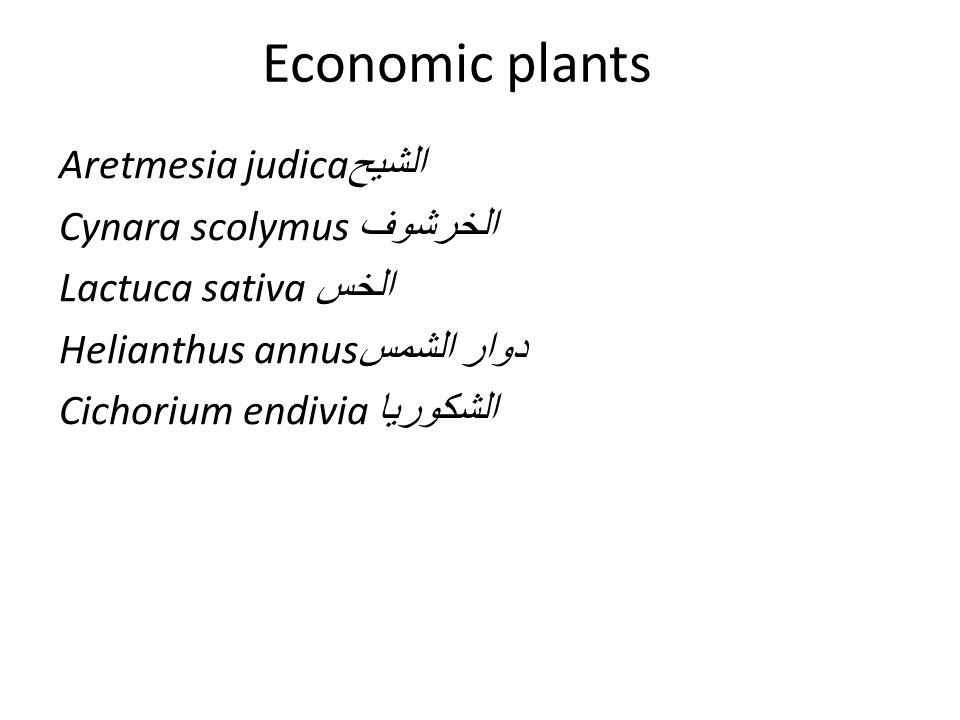 Economic plants Aretmesia judica الشيح Cynara scolymus الخرشوف Lactuca sativa الخس Helianthus annus دوار الشمس Cichorium endivia الشكوريا