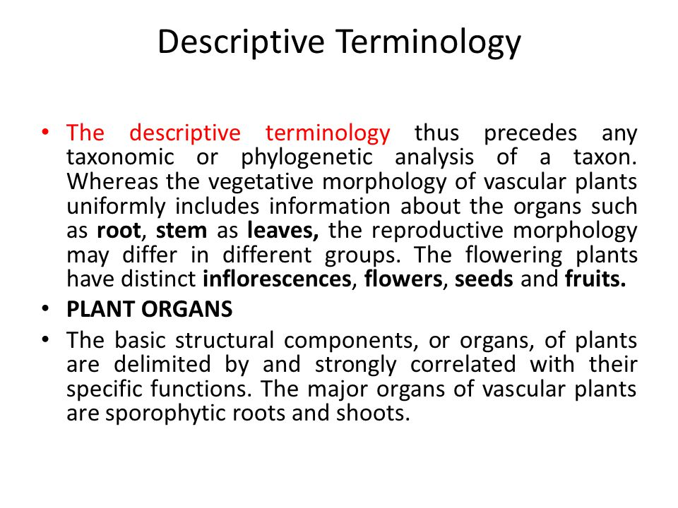 Descriptive Terminology The descriptive terminology thus precedes any taxonomic or phylogenetic analysis of a taxon.