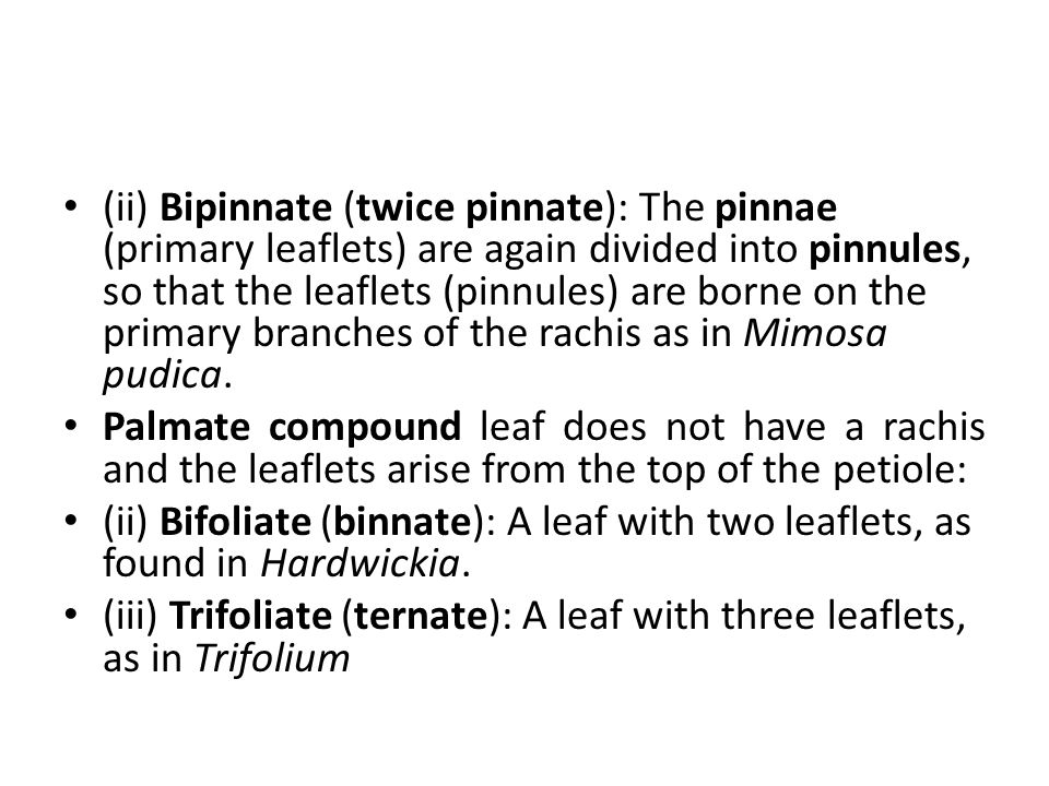 (ii) Bipinnate (twice pinnate): The pinnae (primary leaflets) are again divided into pinnules, so that the leaflets (pinnules) are borne on the primary branches of the rachis as in Mimosa pudica.
