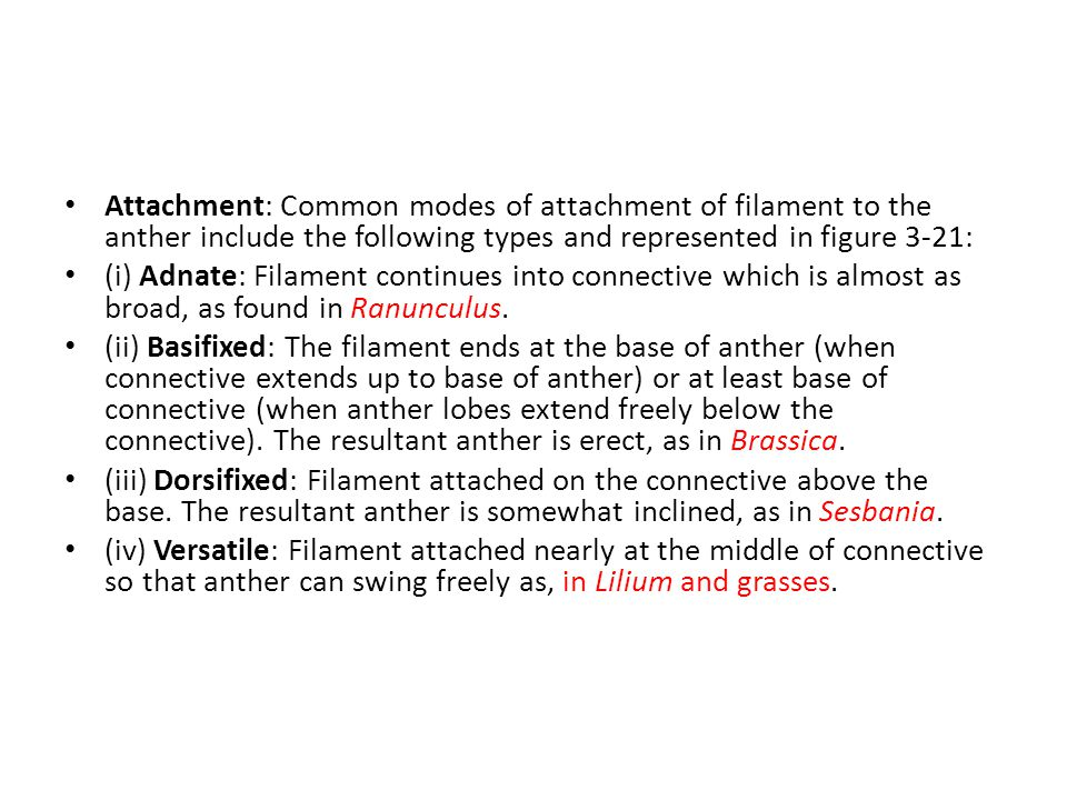 Attachment: Common modes of attachment of filament to the anther include the following types and represented in figure 3-21: (i) Adnate: Filament continues into connective which is almost as broad, as found in Ranunculus.