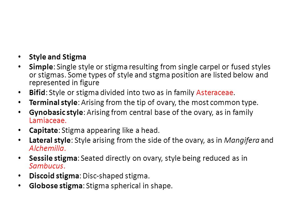 Style and Stigma Simple: Single style or stigma resulting from single carpel or fused styles or stigmas.