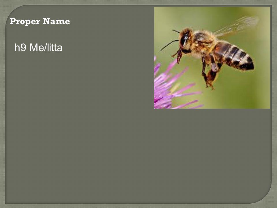 Proper Name h9 Me/litta