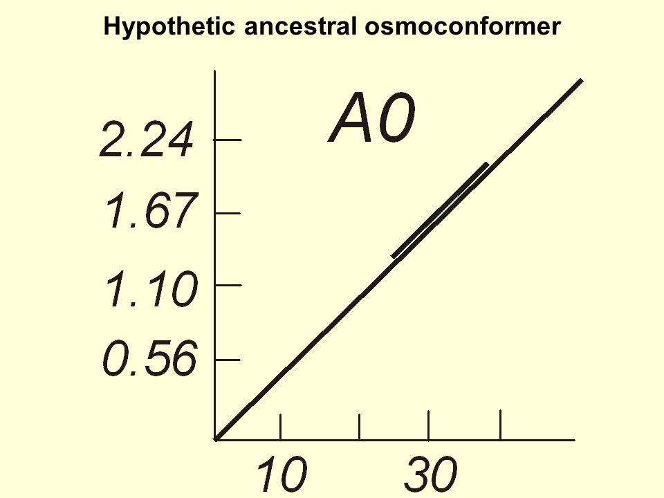 Hypothetic ancestral osmoconformer