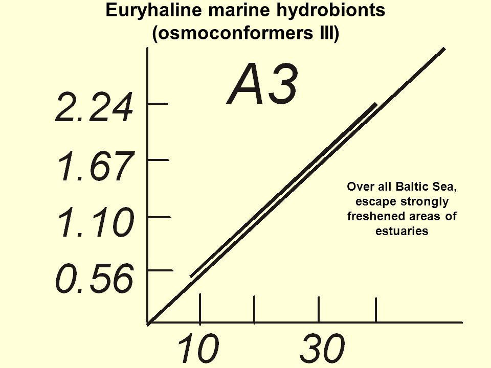Euryhaline marine hydrobionts (osmoconformers III) Over all Baltic Sea, escape strongly freshened areas of estuaries