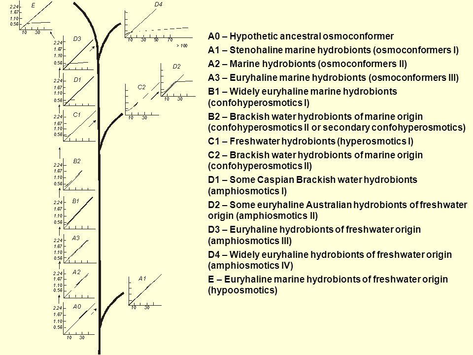 A0 – Hypothetic ancestral osmoconformer A1 – Stenohaline marine hydrobionts (osmoconformers I) A2 – Marine hydrobionts (osmoconformers II) A3 – Euryhaline marine hydrobionts (osmoconformers III) B1 – Widely euryhaline marine hydrobionts (confohyperosmotics I) B2 – Brackish water hydrobionts of marine origin (confohyperosmotics II or secondary confohyperosmotics) C1 – Freshwater hydrobionts (hyperosmotics I) C2 – Brackish water hydrobionts of marine origin (confohyperosmotics II) D1 – Some Caspian Brackish water hydrobionts (amphiosmotics I) D2 – Some euryhaline Australian hydrobionts of freshwater origin (amphiosmotics II) D3 – Euryhaline hydrobionts of freshwater origin (amphiosmotics III) D4 – Widely euryhaline hydrobionts of freshwater origin (amphiosmotics IV) E – Euryhaline marine hydrobionts of freshwater origin (hypoosmotics)