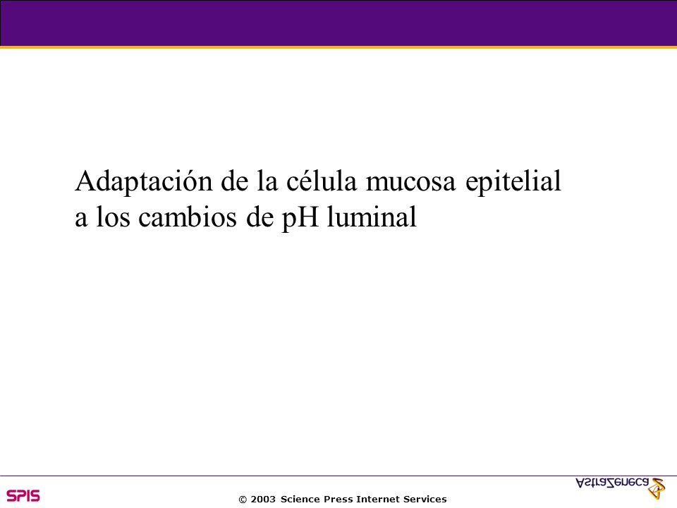 © 2003 Science Press Internet Services Adaptación de la célula mucosa epitelial a los cambios de pH luminal