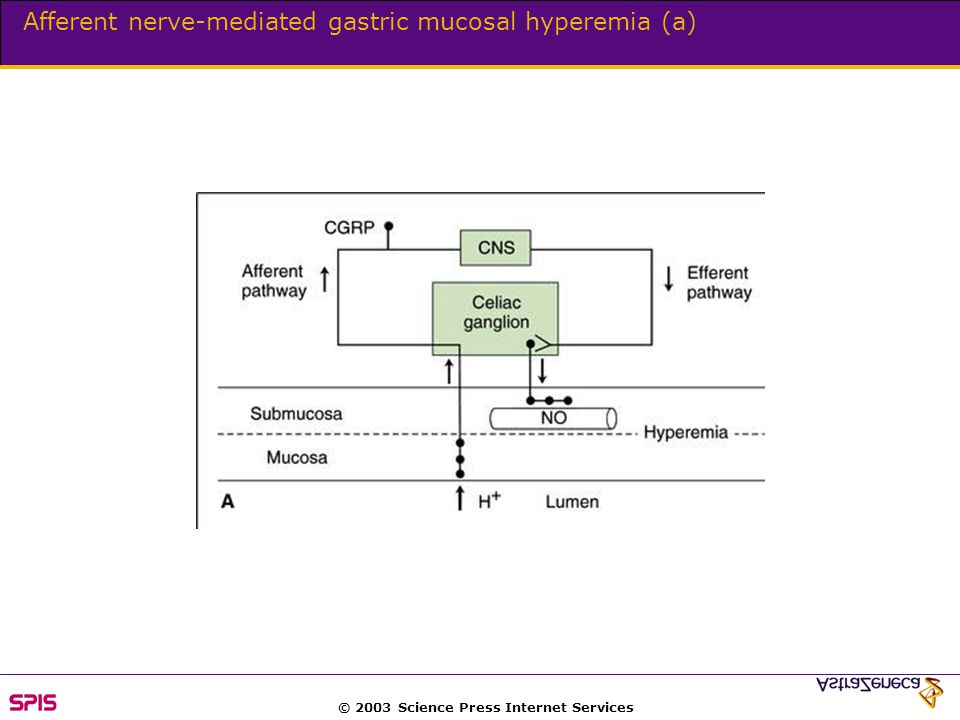 © 2003 Science Press Internet Services Afferent nerve-mediated gastric mucosal hyperemia (a)