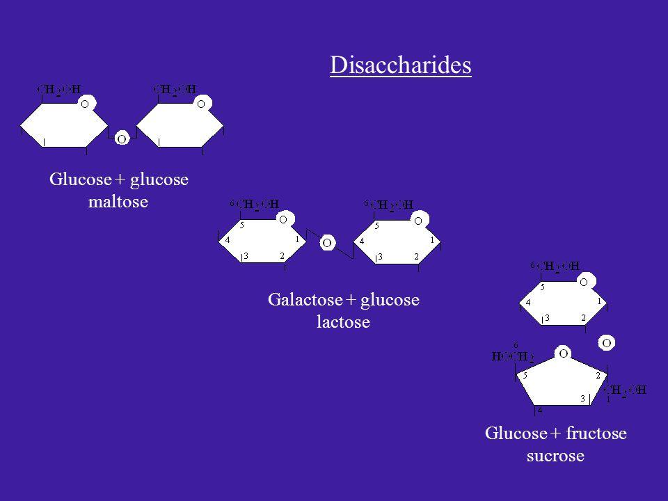 Glucose + glucose maltose Galactose + glucose lactose Glucose + fructose sucrose Disaccharides