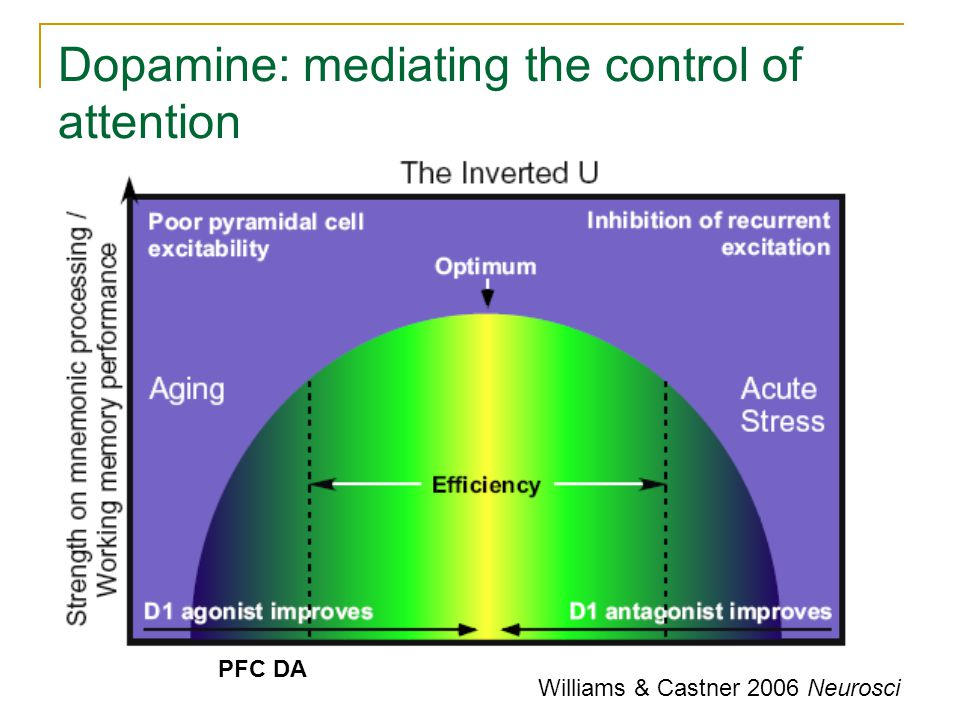 PFC and Striatal Dopamine PFC DA promotes cognitive stability, whereas Striatal DA promotes cognitive flexibility PFC DA levels + Striatal DA levels (which also modulates PFC DA activity) might explain that inverted-U curve model.