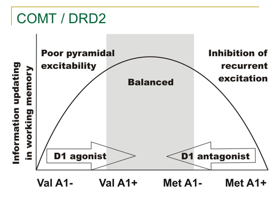 Objectives COMT and DRD2 genes Context Updating We tested the epistasis of COMT and DRD2 genes on Context Updating during: 1.Involuntary attentional switching in a distraction paradigm 2.Voluntary attentional switching in a task-switching paradigm