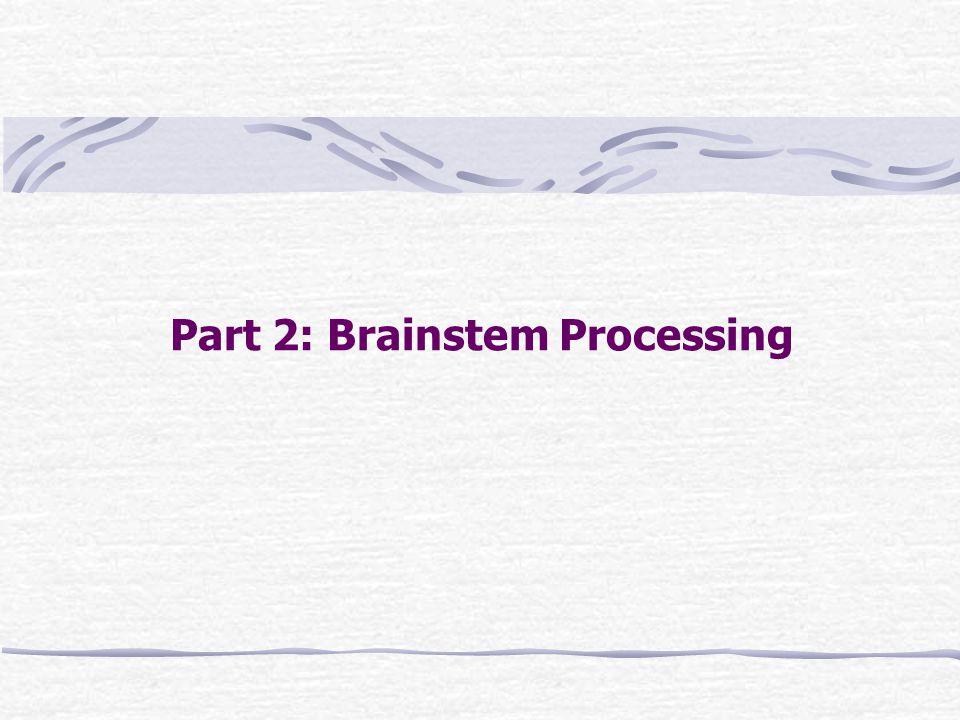Part 2: Brainstem Processing