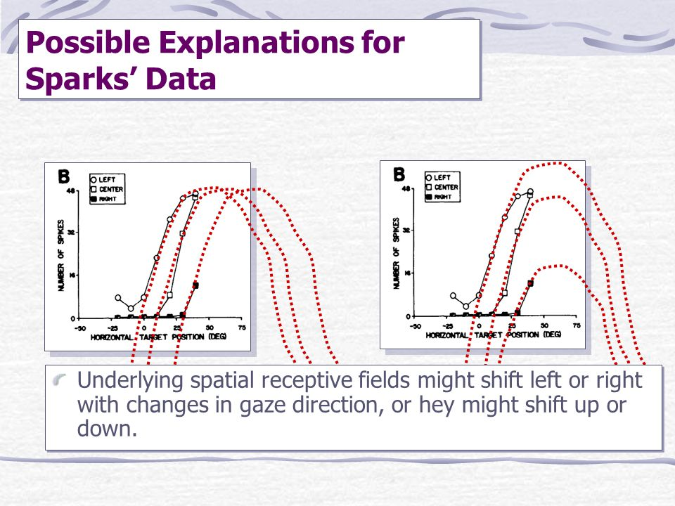 Possible Explanations for Sparks' Data Underlying spatial receptive fields might shift left or right with changes in gaze direction, or hey might shif