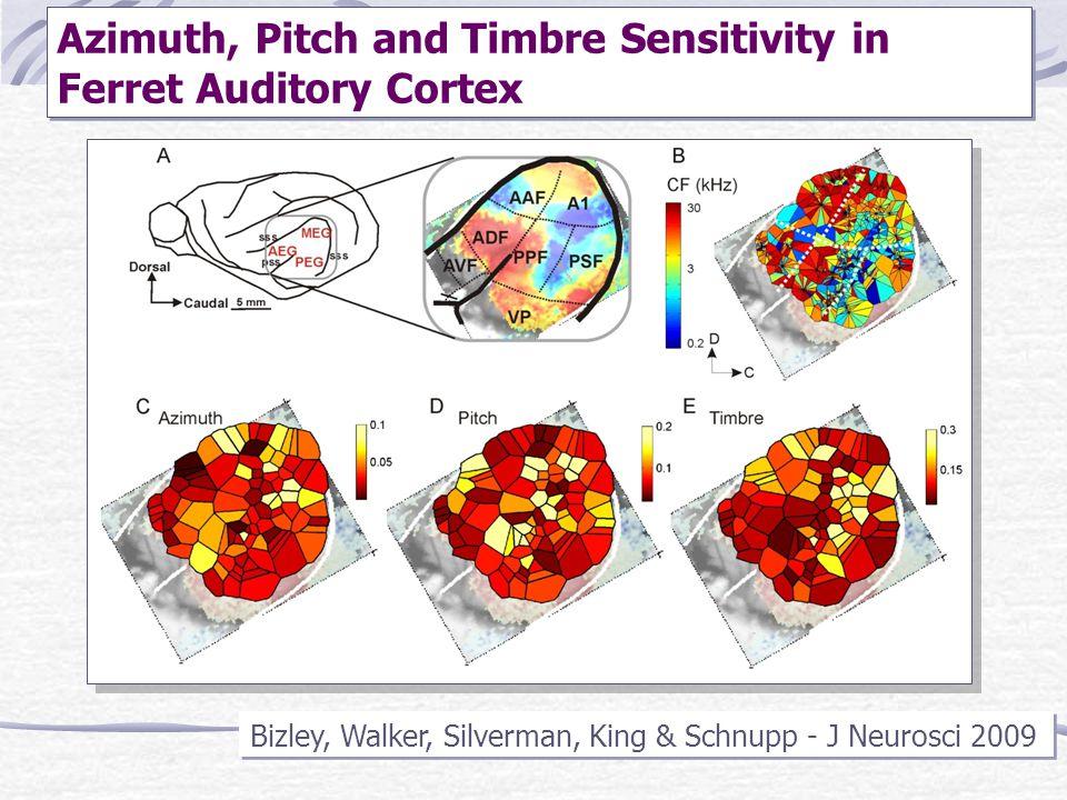 Azimuth, Pitch and Timbre Sensitivity in Ferret Auditory Cortex Bizley, Walker, Silverman, King & Schnupp - J Neurosci 2009