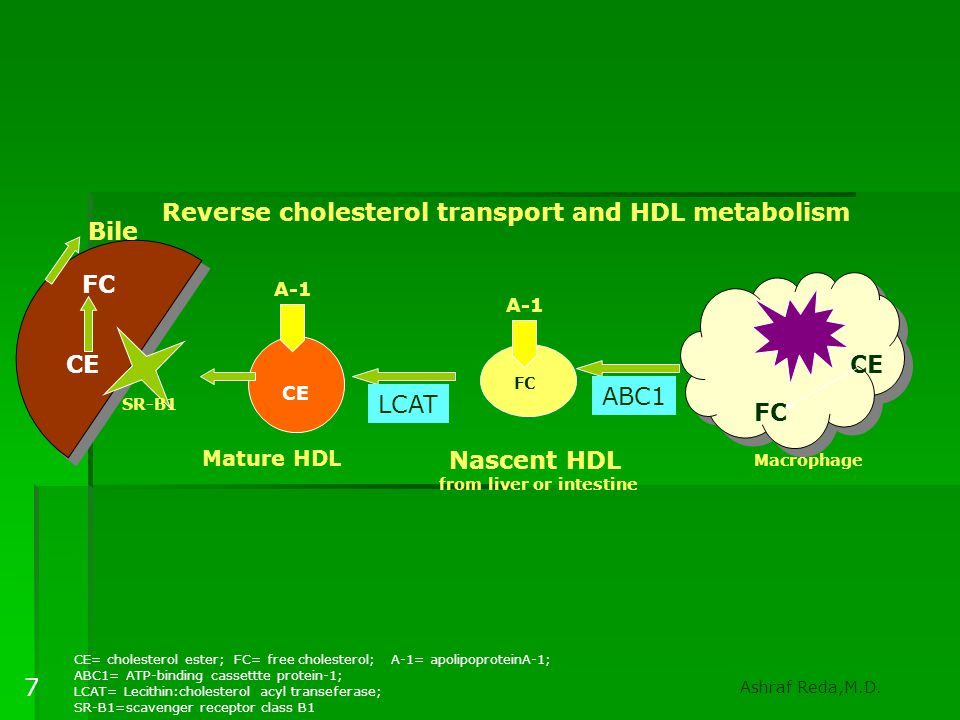 HDL  Reverse cholesterol transport(Apo- A1—ABC-A1)  Inhibition of adhesion molecules  Antioxident  Vasotonic effect  Prevent LDL oxidation and deposition Ashraf Reda,M.D.