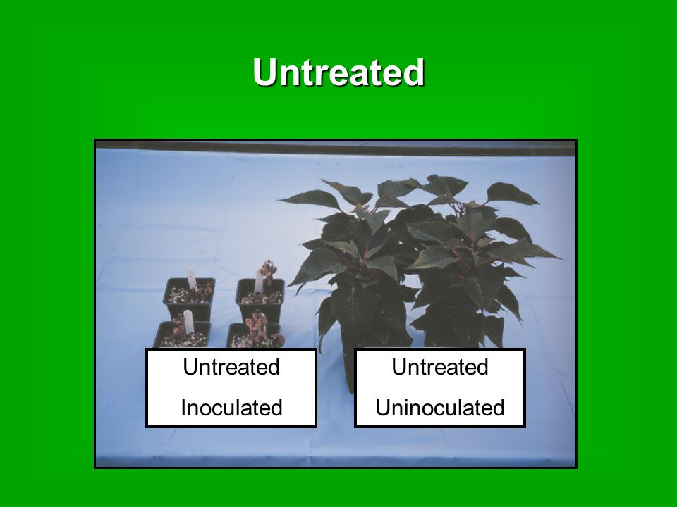 Untreated Untreated Uninoculated Untreated Inoculated
