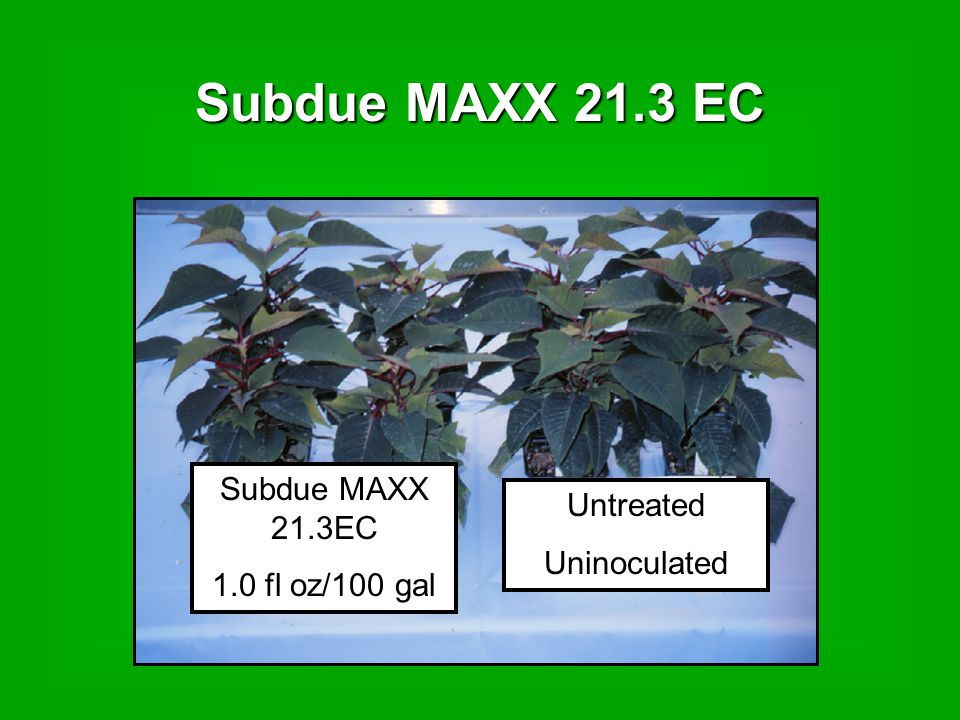 Subdue MAXX 21.3 EC 1.0 fl oz/100 gal Untreated Uninoculated