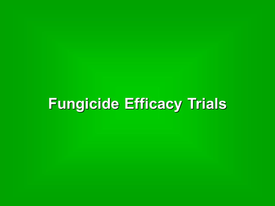 Fungicide Efficacy Trials