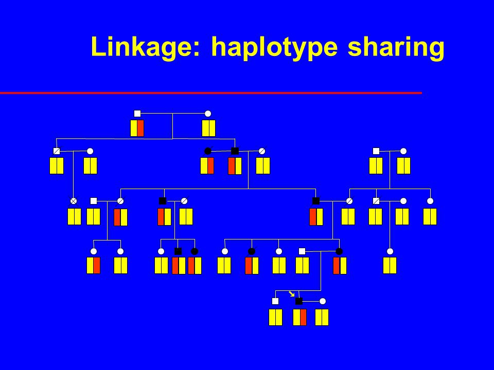Linkage: haplotype sharing