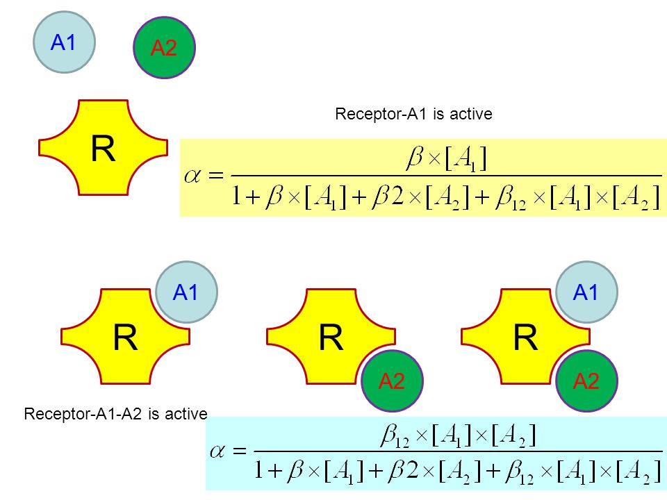 R A1 A2 R A1 R A2 R A1 A2 Receptor-A1 is active Receptor-A1-A2 is active