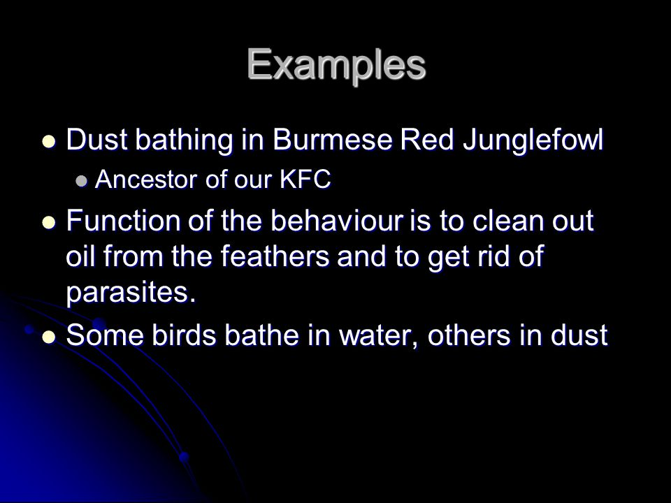 Examples Dust bathing in Burmese Red Junglefowl Dust bathing in Burmese Red Junglefowl Ancestor of our KFC Ancestor of our KFC Function of the behaviour is to clean out oil from the feathers and to get rid of parasites.