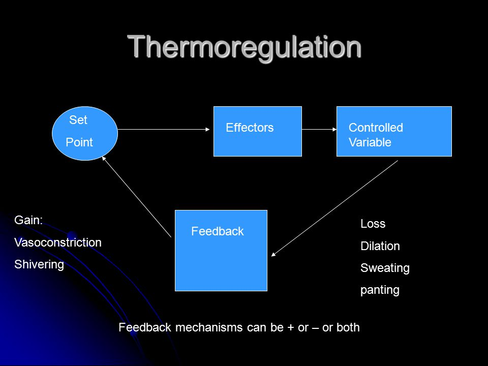 Thermoregulation Set Point EffectorsControlled Variable Feedback Gain: Vasoconstriction Shivering Loss Dilation Sweating panting Feedback mechanisms can be + or – or both