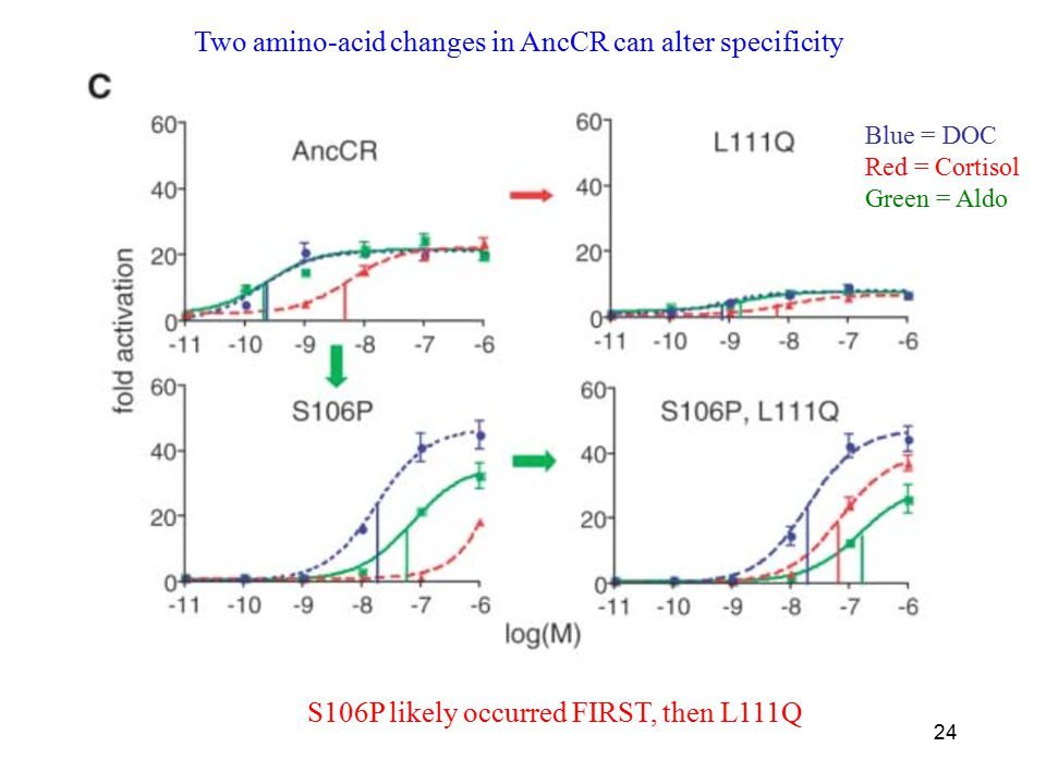 24 Two amino-acid changes in AncCR can alter specificity Blue = DOC Red = Cortisol Green = Aldo S106P likely occurred FIRST, then L111Q