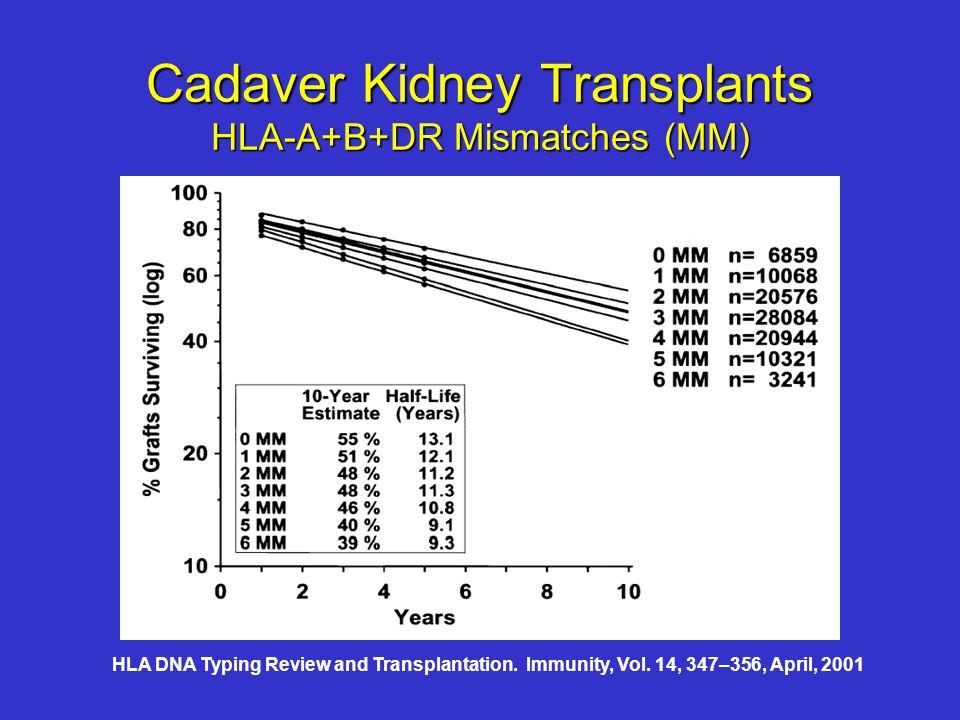 Cadaver Kidney Transplants HLA-A+B+DR Mismatches (MM) HLA DNA Typing Review and Transplantation.
