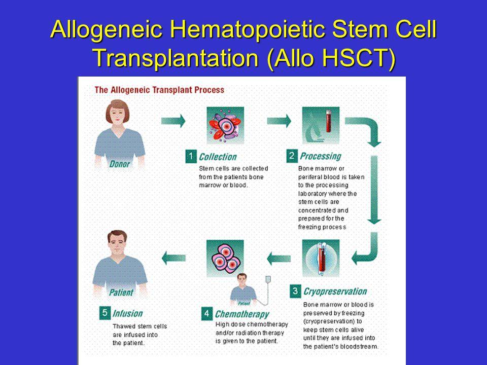 Allogeneic Hematopoietic Stem Cell Transplantation (Allo HSCT)