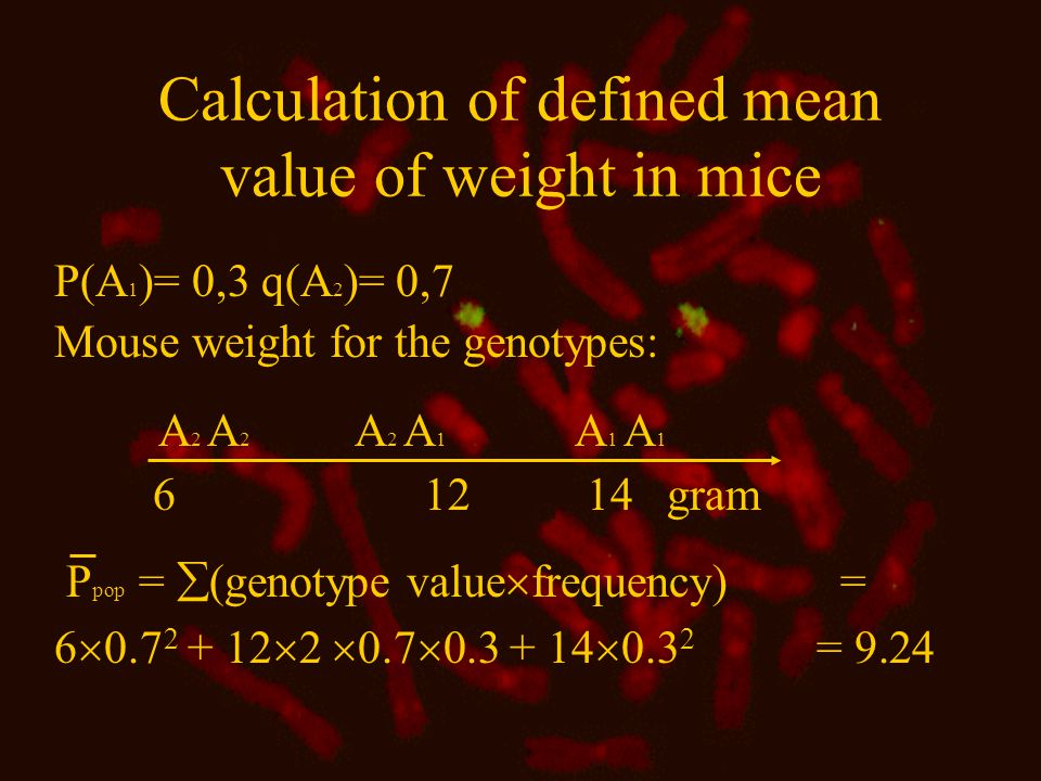 Calculation of defined mean value of weight in mice P(A 1 )= 0,3 q(A 2 )= 0,7 Mouse weight for the genotypes: A 2 A 2 A 2 A 1 A 1 A 1 6 12 14 gram P pop =  (genotype value  frequency) = 6  0.7 2 + 12  2  0.7  0.3 + 14  0.3 2 = 9.24