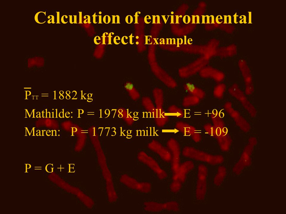Calculation of environmental effect: Example P TT = 1882 kg Mathilde: P = 1978 kg milk E = +96 Maren: P = 1773 kg milk E = -109 P = G + E