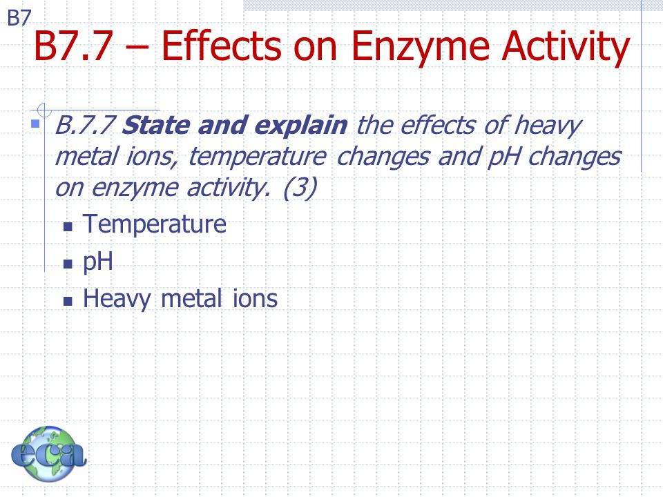 B7 B7.7 – Effects on Enzyme Activity  B.7.7 State and explain the effects of heavy metal ions, temperature changes and pH changes on enzyme activity.