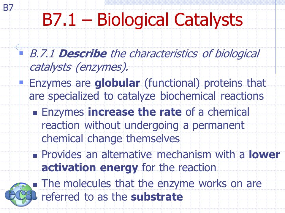 B7 B7.1 – Biological Catalysts  B.7.1 Describe the characteristics of biological catalysts (enzymes).  Enzymes are globular (functional) proteins th