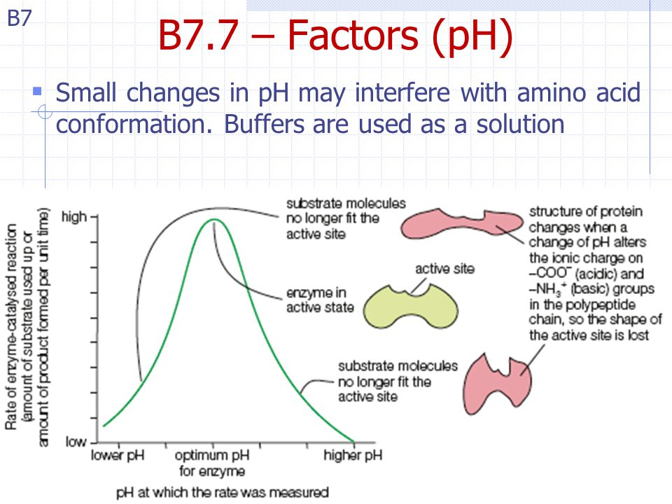 B7 B7.7 – Factors (pH)  Small changes in pH may interfere with amino acid conformation. Buffers are used as a solution