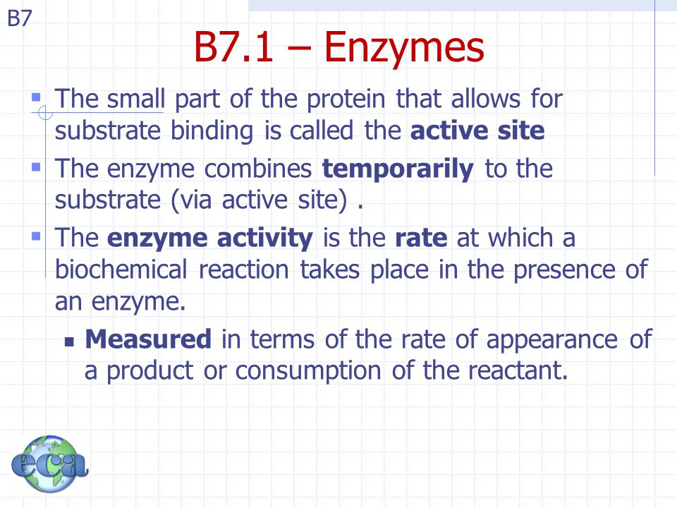 B7 B7.1 – Enzymes  The small part of the protein that allows for substrate binding is called the active site  The enzyme combines temporarily to the