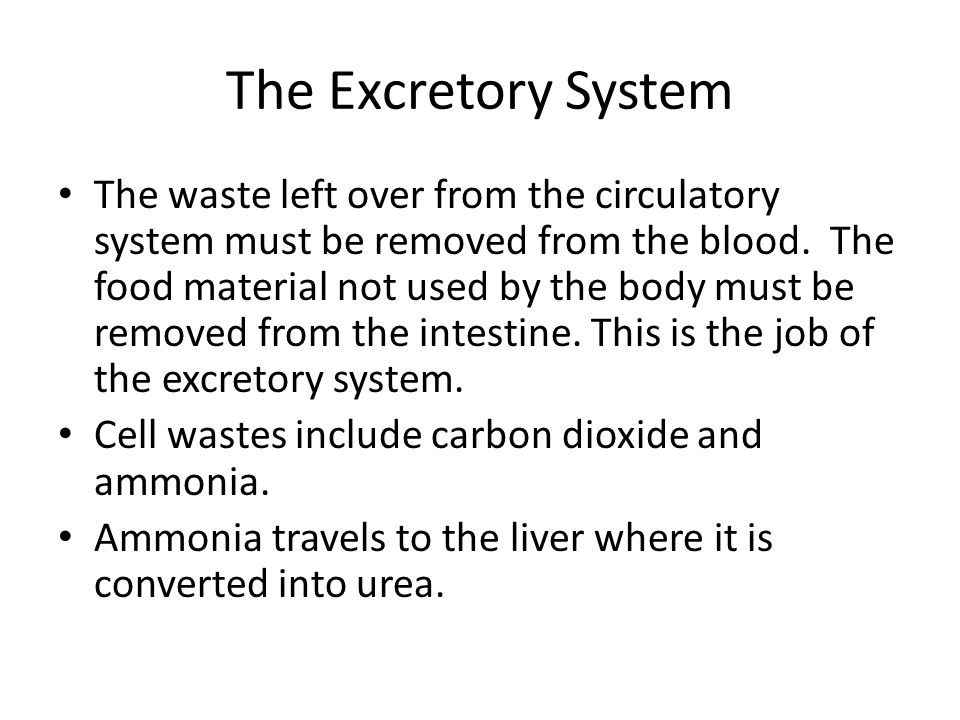 The Excretory System The waste left over from the circulatory system must be removed from the blood.